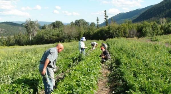 ISKCON Ashcroft Saranagati Eco Farm